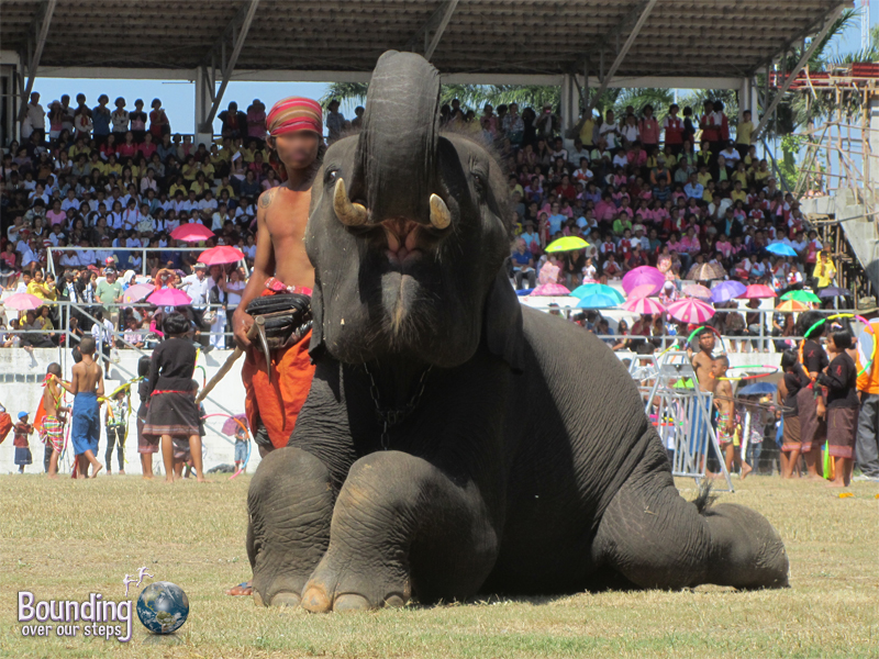 An elephant posing at the Surin Elephant Roundup