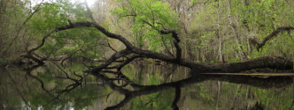 Canoeing Hillsborough River - Featured