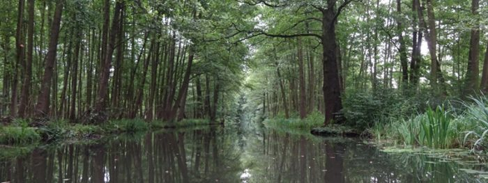 Things to do in Berlin - Spreewald - Featured