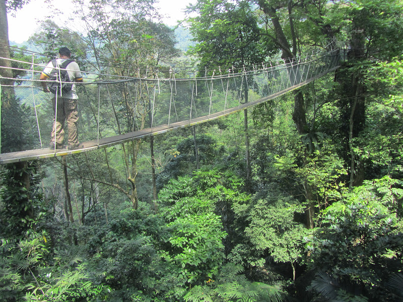 After lots of u201cupu201d we came to the canopy walkway which was reportedly 30 meters (90 feet) off the ground & Kuala Lumpur - FRIM and the Canopy Walkway - Bounding Over Our Steps