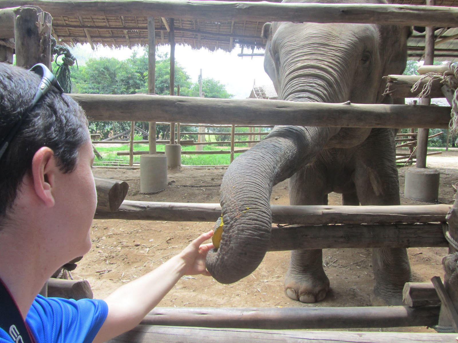 an introduction to the nature of the elephant Asian elephants are smaller than their african counterparts, most easily noted in  their  two elephants, two pots of sun-flower seeds and a rope  introduction.